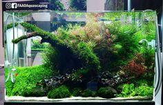 Beautiful planted aquarium of ADA booth at CIPS Exhibition in Guangzhou China. #FAAO #Aquascaping #Planted #Aquarium #Aquatic #Plant #Freshwater #aquascape #plantedtank #plantedaquarium #China #AquascapingMakesMyWorldGoRound #CIPS