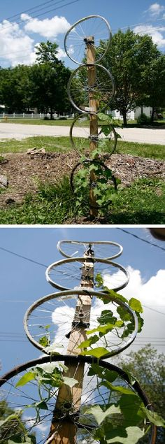 Great Upcycle idea !Bike Wheel Trellis – Hard Luffa