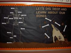 human bones Science Bulletin Board Ideas - Bing Images