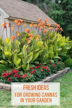 There is nothing subtle about With their big impressive height and vibrant, orchid-like these flashy extroverts love being the center of attention. Canna Lily Landscaping, Tropical Landscaping, Landscaping Plants, Front Yard Landscaping, Landscaping Design, Tropical Garden Design, Florida Landscaping, Tropical Gardens, Garden Yard Ideas
