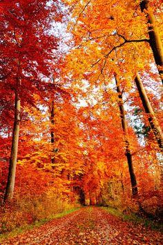 Autumn Road, Bavaria.