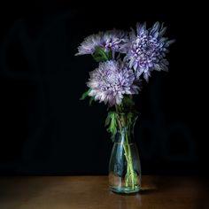Still Life Flowers, Still Life Art, Still Life Photography, Life Inspiration, Light Shades, Glass Vase, Painting, Vases, Crowd