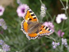 Vlinder Foto van Nathalie