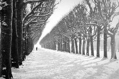 Parc de l'Observatoire, sous la neige, Meudon, France by VérOooo