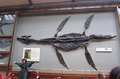 Mary Anning's Plesiosaur