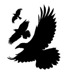 The Divergent Birds