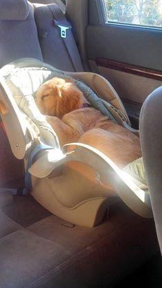 But I AM the baby! #rescuedog #dog #itsarescuedoglife