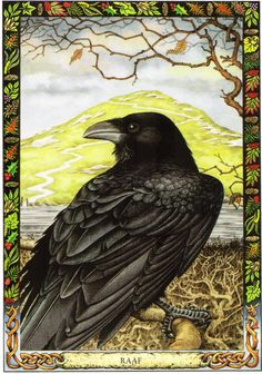 Raven | The Druid Animal Oracle by Stephanie and Phillip Carr | Meaning: healing, initiation and protection | Reversed, it says to beware of the forces of destruction in your world.