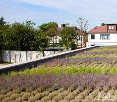Lavender & Herbs Green Roof - #WildAboutRoofs #GreenRoofs #nature #green #mothernature #beautiful #garden #plants #naturelover #lovenature #earth #roofing #roofs #newhome #decoration #environment