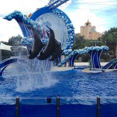Blue Horizons Dolphin Show at SeaWorld Orlando, Florida Orlando Travel, Orlando Vacation, Orlando Resorts, Orlando Florida, Vacation Trips, Orlando Holiday, Dolphin Reef, Ocean Park Hong Kong, Seaworld Orlando