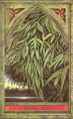 Gypsy Magic: Sign of the Willow