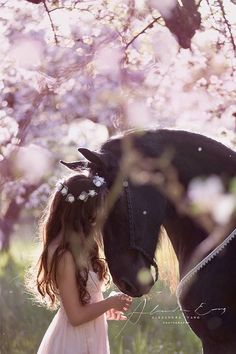 Horse Photo by: Alexandra Evang Photographie. Pink flowering trees and girl in p. - Horse Photo by: Alexandra Evang Photographie. Pink flowering trees and girl in pink dress with flow -