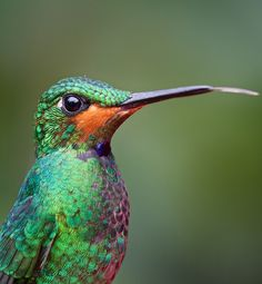 I'm no bird expert, but this looks like a beautiful little hummingbird with peacock-like colouration