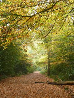 St Helens Woods, Hastings