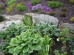 Allium (Kirgisløk)