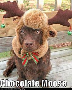 roupa para cachorro?!