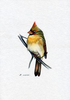 Cardinal bird, birds, Watercolor Original Painting Art, Quick sketch #Realism  Natalia Komisarova   NatalieStorePainting     You can also find me on:    EBAY: http://www.ebay.com/usr/natalie_komisarova.art    ETSY: https://www.etsy.com/shop/NatalieStorePainting    FACEBOOK: https://www.facebook.com/komisarova.art    #NataliePaintings #Natalie #Artist