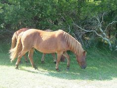 Assateague State Park, a Maryland park located near Berlin, Ocean City