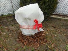 Sprawdź jak zabezpieczyć hortensje na zimę Flowers, Gardening, Lawn And Garden, Royal Icing Flowers, Flower, Florals, Floral, Horticulture, Blossoms