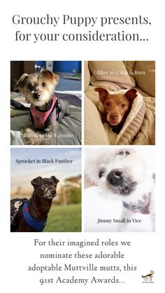 Adorable adoptable nominees for their award winning imagined roles: Radish, in The Favorite; Jimmy Small in Vice; Glitter in A Star is Born; and Sprocket in Black Panther 🐾 A Star Is Born, Oscars, Black Panther, Adoption, Teddy Bear, Glitter, Puppies, Mom, Cute