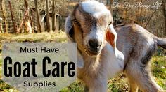 What supplies should you always have on hand if you have goats on your farm? Here's a list of must-have goat care supplies