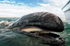 Grey Whale Watching In Baja California, Mexico Photography By: Christopher Swann
