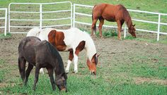 If You Don't Know the Horse Deworming Practices Where You Board, It's Time to Ask