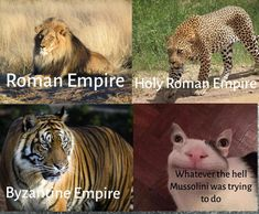 Damn it Mussolini - Memes - History Facts History Jokes, History Facts, Funny History, Memes Humor, Stupid Funny Memes, The Funny, Funny Stuff, 9gag Funny, Funny Images