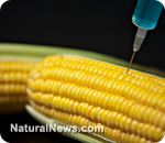 GMOs - Suspected culprit in devastating 'fiber disease'    Learn more: http://www.naturalnews.com/037867_GMO_Morgellons_disease_mysterious_fibers.html##ixzz2BYbf6yTw