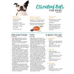 Young Living Essential Oils Canine Seizures Protocol Www