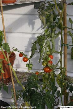 egen tomatodling Stuffed Peppers, Fruit, Vegetables, Image, House, Gardening, Home, Stuffed Pepper, Lawn And Garden