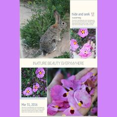 If you truly #love #nature and wild #rabbit  #lol lyou will find #beauty everywhere #ig_daily #flowers #flowerstagram #naturegram #nice #pretty #pink #colour #backyard #spring #picoftheday #ig_myshot #instamoment #landscape #nofilter #tbt #happy #smile #ig_capture by kimnet102