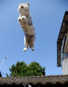 猫のジャンプの瞬間。