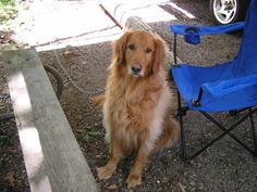 This is Bailey,another one of Megan puppies. Who belonged to some dear close friends. He lived from 1999 - 2007.