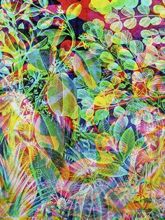acid leaves