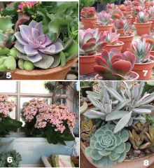 """From Debra Lee Baldwin's """"Designing with Succulents"""" and """"Succulent Container Gardens"""" --- Garden Center Magazine"""
