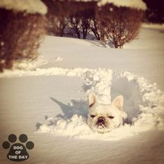 Snow plow...