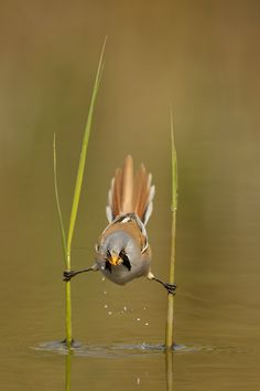 hahaha! No idea what type of bird this is, will look it up later, but gahleeeeee this is a funny lookin little thing!