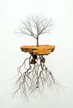 Les Sculptures d'Arbres Suspendus et les Racines cubaines de Jorge Mayet (9)