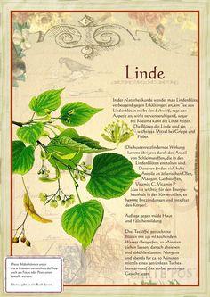 Linde http://www.kraeuter-verzeichnis.de/
