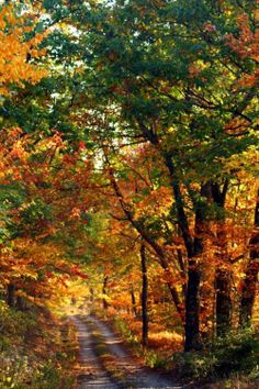 Autumn Admiration