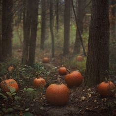 Imagem de pumpkin, fall, and autumn