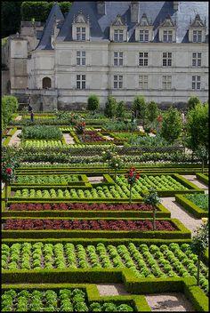 Les jardins du Château de  Villandry  Loire France