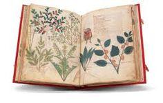 Znalezione obrazy dla zapytania Vienna Dioscorides