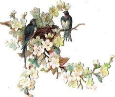 Oblaten Glanzbild scrap die cut  chromo  Vogel bird Nest  Ast  Blüten blossom