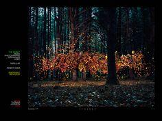 #thomas #jackson #emergent #behavior #amazing #photography #floating #leaves