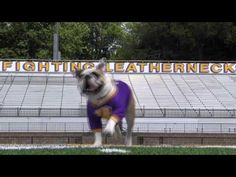 Colonel Rock having fun on Hanson Field during a recent photo/video shoot.