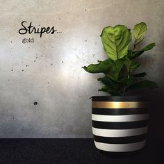 Black and white and gold stripes flower pot. I can totally DIY this with some spray paint and washi tape! Deco Cactus, Concrete Pots, Cactus Y Suculentas, Painted Pots, Clay Pots, Flower Pots, Flowers, Indoor Plants, Diy Home Decor