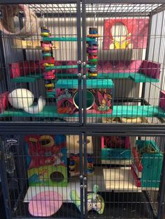 Super colorful two level Ferret Nation chinchilla cage setup. I love the designs on all the wooden hideouts, ledges and accessories.