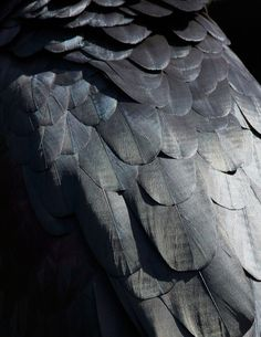 Des plumages d'oiseaux abstraits
